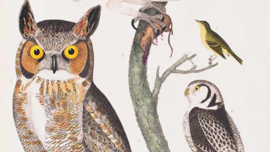 "Alexander Wilson (American, born Scotland, 1766–1813), Plate 50: Great-Horned Owl, Barn Owl, Meadow Vole, Red Bat, ""Small-headed Flycatcher,"" Northern Hawk Owl, from American Ornithology; or The Natural History of the Birds of the United States, vol. 6. H"