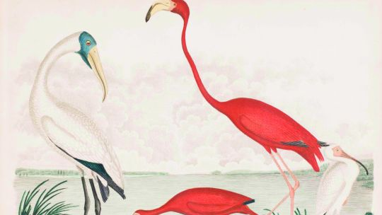 Alexander Wilson (American, born Scotland, 1766–1813), Plate 66: Wood Stork, Scarlet Ibis, Flamingo, White Ibis, from American Ornithology; or The Natural History of the Birds of the United States, vol. 8. Hand-colored etching and engraving with letterpre